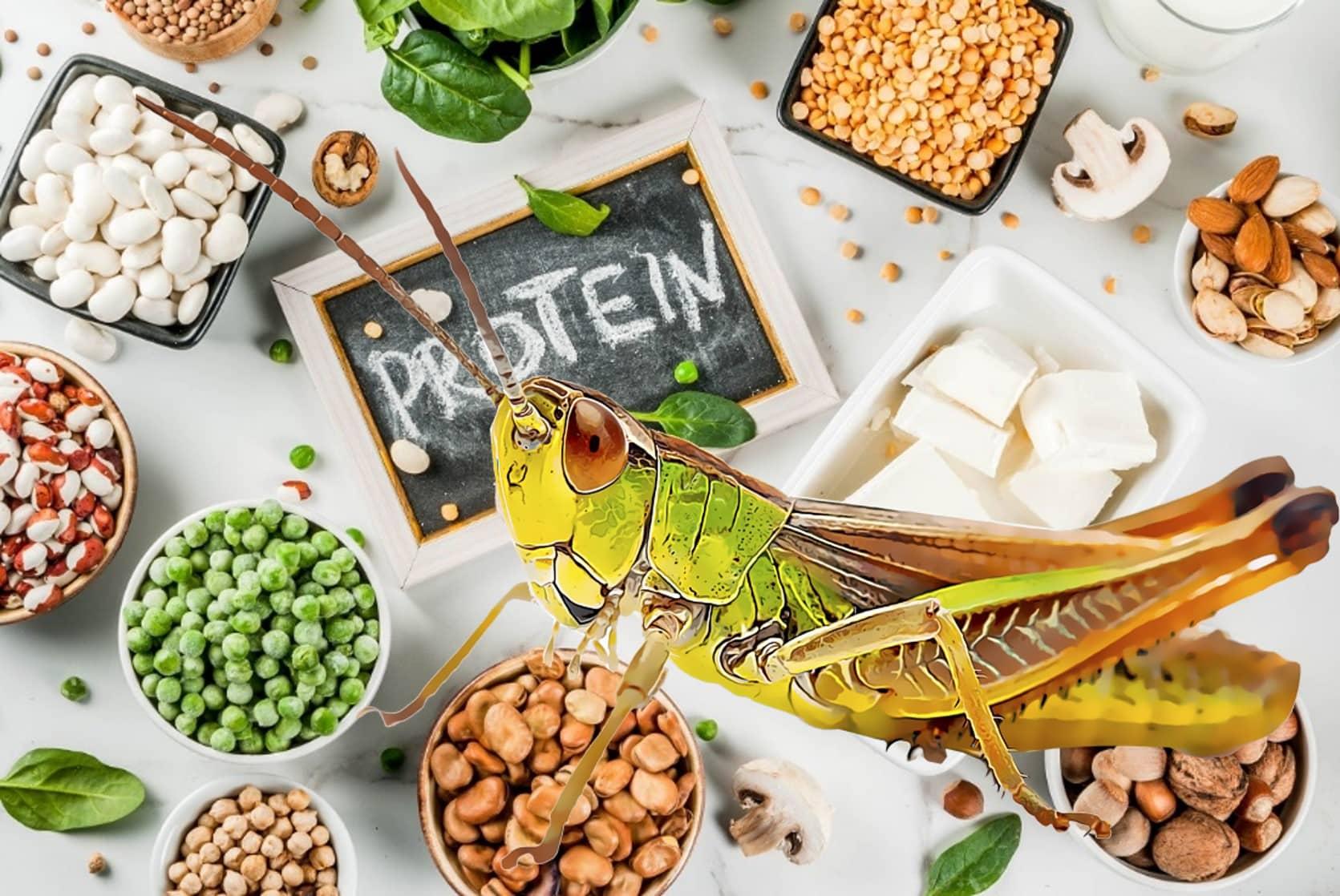 Gesunde veganische Ernährung, vegetarische Proteinquellen: Tofu, veganische Milch, Bohnen, Linsen, Nüsse, Sojamilch, Spinat und Samen. Draufsicht auf weißem Tisch.
