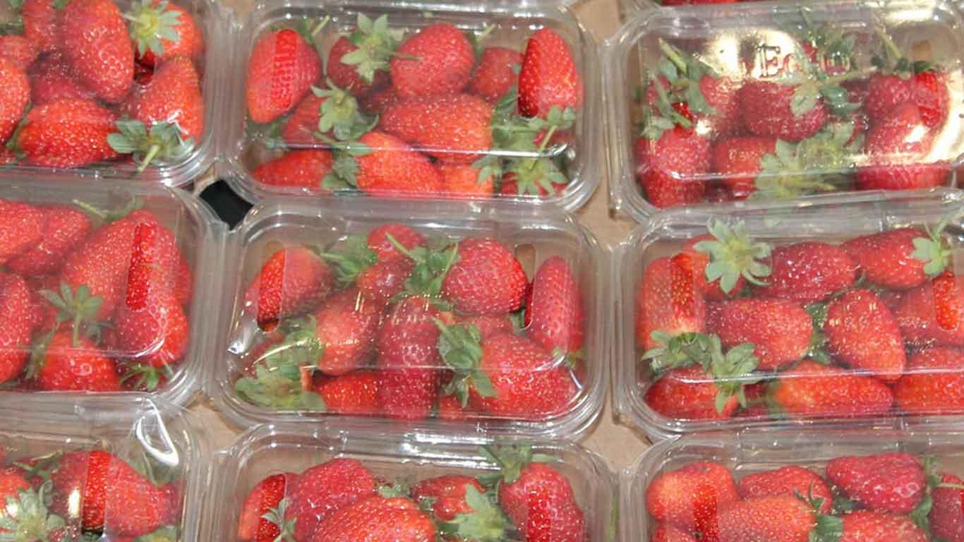 Erdbeeren in einer Plastikverpackung aneinander gereiht.