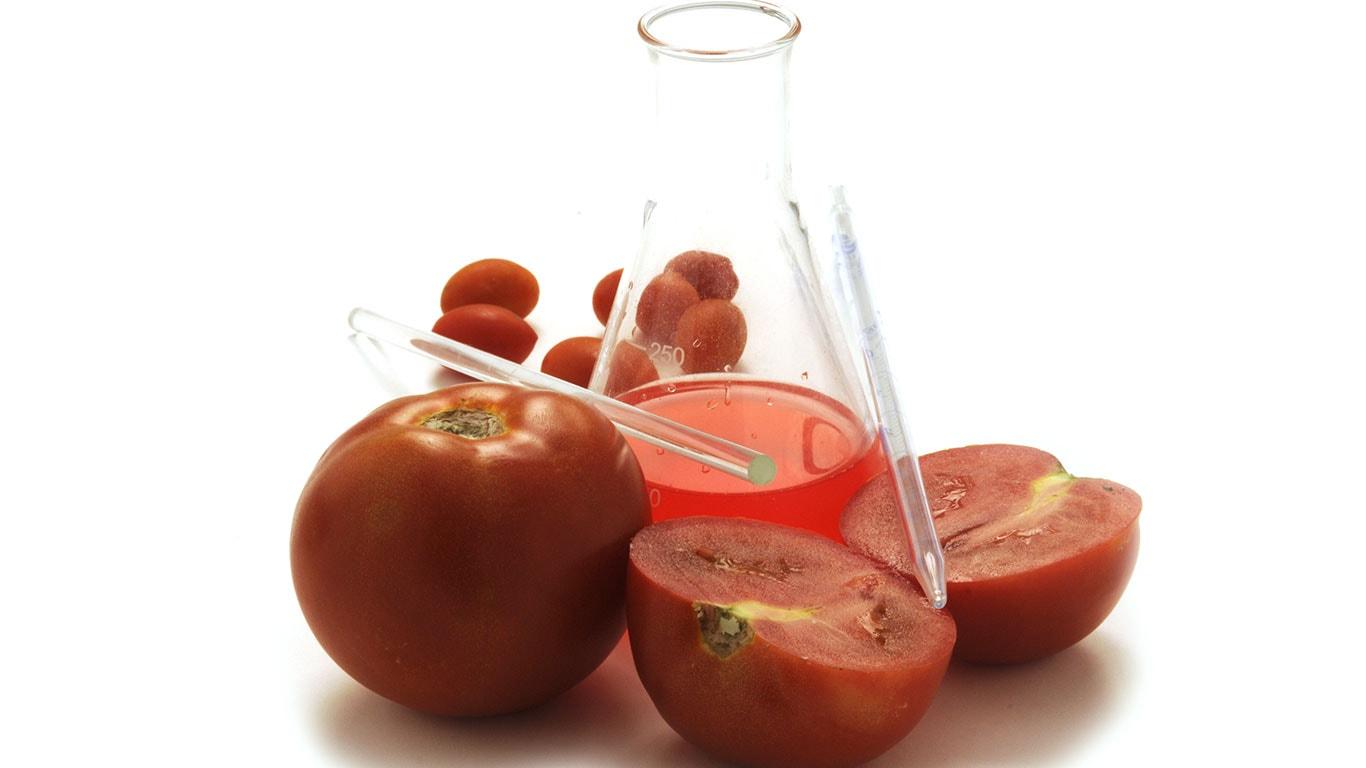 Pomodori in laboratorio